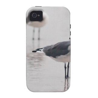 Gaviota Case-Mate iPhone 4 Carcasa