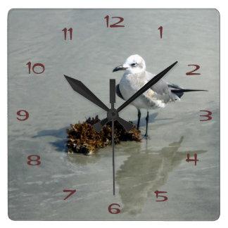 Gaviota con alga marina reloj