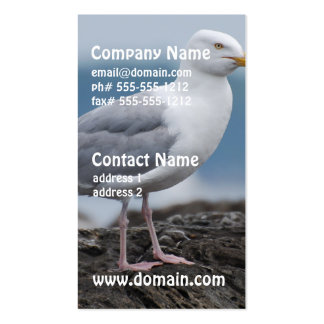 Gaviota costera tarjeta personal