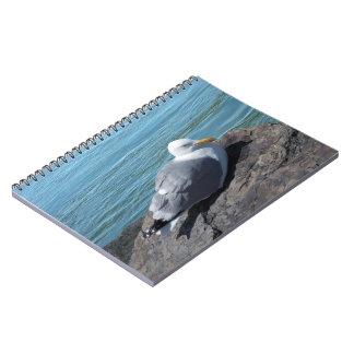 Gaviota de arenques en el embarcadero de la roca notebook