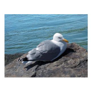 Gaviota de arenques en el embarcadero de la roca tarjeta postal