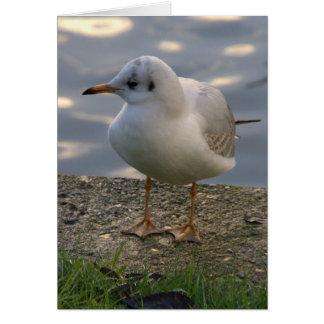 Gaviota de arenques europea tarjeta de felicitación