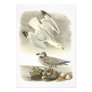 Gaviota de arenques Juan Audubon Anuncios