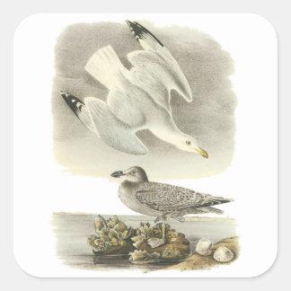 Gaviota de arenques, Juan Audubon Calcomanía Cuadradas