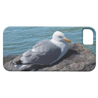 Gaviota de arenques que descansa sobre el embarcad iPhone 5 protectores