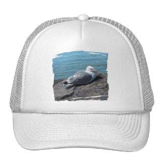 Gaviota de arenques que descansa sobre el embarcad gorra