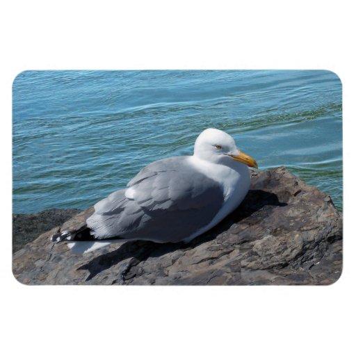 Gaviota de arenques que descansa sobre el embarcad imanes flexibles