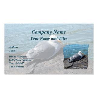 Gaviota de arenques que descansa sobre el embarcad tarjetas de visita