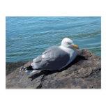 Gaviota de arenques que descansa sobre el embarcad tarjeta postal