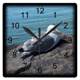 Gaviota de arenques que descansa sobre el reloj de pared
