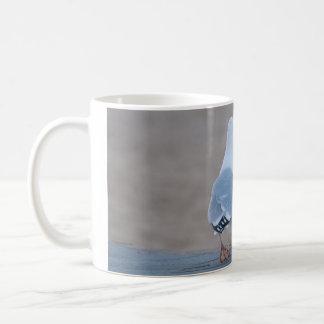 Gaviota de arenques taza