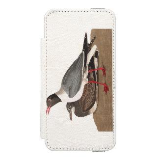 Gaviota de cabeza negra de la placa 314 de Audubon Funda Billetera Para iPhone 5 Watson