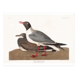 Gaviota de cabeza negra de la placa 314 de Audubon Postal