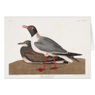 Gaviota de cabeza negra de la placa 314 de Audubon Tarjeta De Felicitación