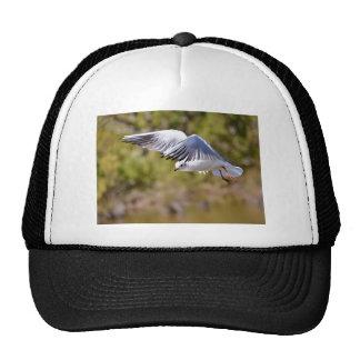 Gaviota de cabeza negra en vuelo gorros