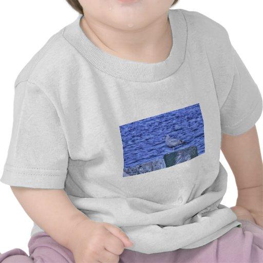 Gaviota de HDR que se sienta en el pilón del Camisetas