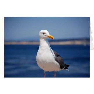 Gaviota de la bahía de Monterey Tarjeta De Felicitación