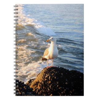Gaviota de la playa de Venecia Notebook