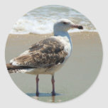 Gaviota de la playa pegatinas redondas