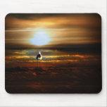 Gaviota de la puesta del sol