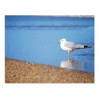 Gaviota de OBX en el pájaro de la costa de Carolin Postales