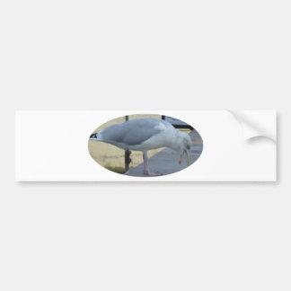 Gaviota de risa etiqueta de parachoque