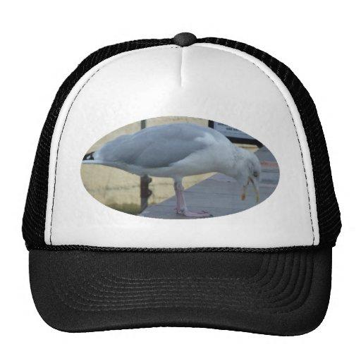 Gaviota de risa gorra
