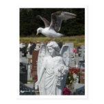 Gaviota del cementerio postal