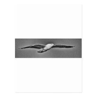 Gaviota del Flyby Tarjetas Postales