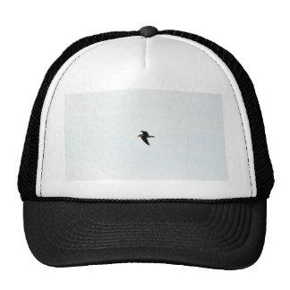 Gaviota del vuelo alta gorra