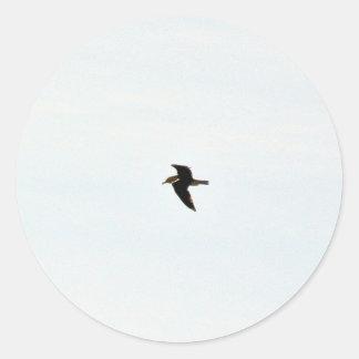 Gaviota del vuelo alta etiqueta redonda