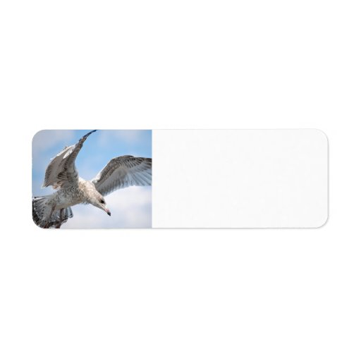 Gaviota del vuelo etiquetas de remite