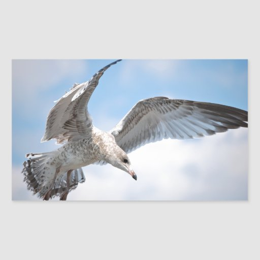 Gaviota del vuelo rectangular altavoces