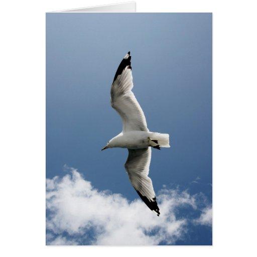 gaviota del vuelo tarjeta de felicitación