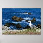 Gaviota delante de la costa costa pacífica, foto posters