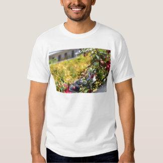 Gaviota detrás de un campo de flores playera