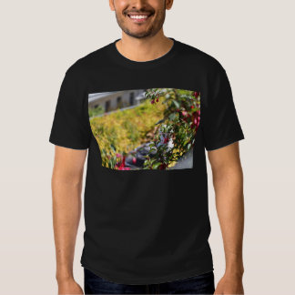 Gaviota detrás de un campo de flores playeras