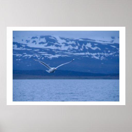 Gaviota el vuelo noruego al poster de la libertad
