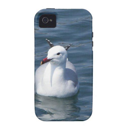 Gaviota en el agua vibe iPhone 4 carcasa