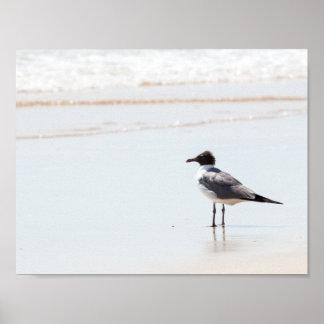 Gaviota en el poster de la playa