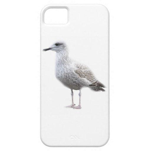 Gaviota en la caja blanca del iPhone 5 iPhone 5 Case-Mate Funda
