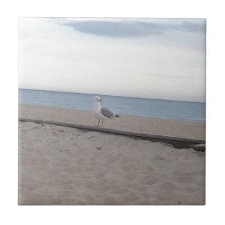 Gaviota en la playa azulejo ceramica