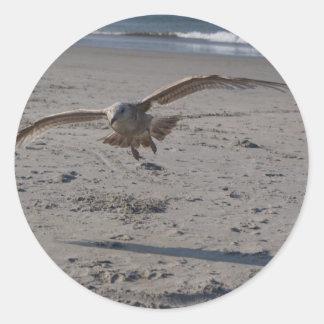 Gaviota en la playa etiquetas redondas