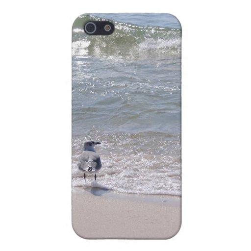 Gaviota en la playa iPhone 5 funda