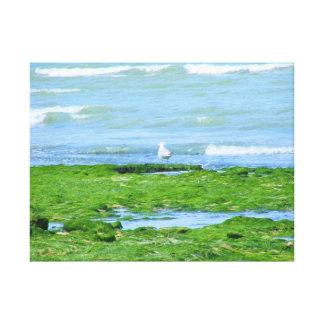 Gaviota en la playa impresión en lienzo estirada