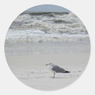 Gaviota en la playa etiquetas