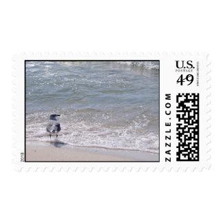 Gaviota en la playa sello