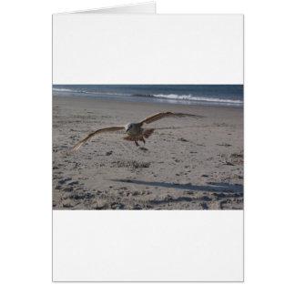 Gaviota en la playa tarjeta