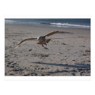 Gaviota en la playa tarjetas postales