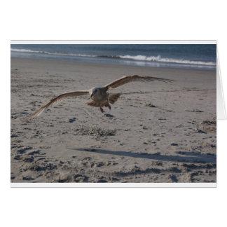Gaviota en la playa tarjetón